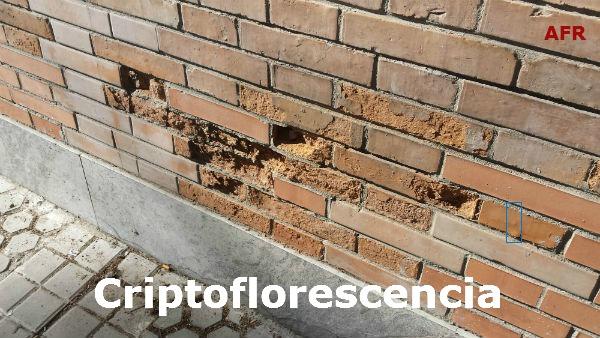 Criptoflorescencia En La Construcción